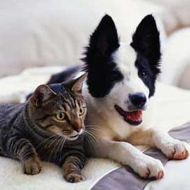 Manual de Animais para Condomínio