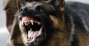 220613---cachorro-mostra-os-dentes-para-manifestantes-durante-protesto-em-belo-horizonte-1371937657982_956x500